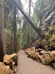 A path through the Sunnybrae woods