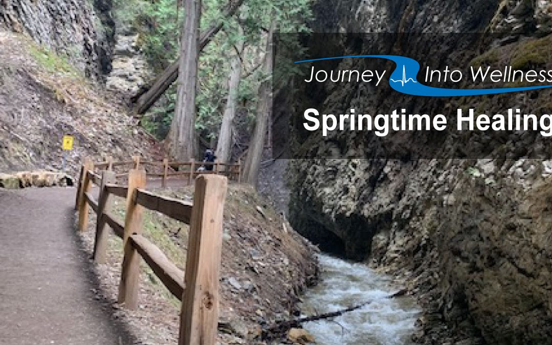 Spring-time, Healing, and Your Journey Into Wellness